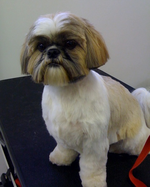 Cool Dog Grooming Julies Trimming Services The Techniques Hairstyles For Women Draintrainus